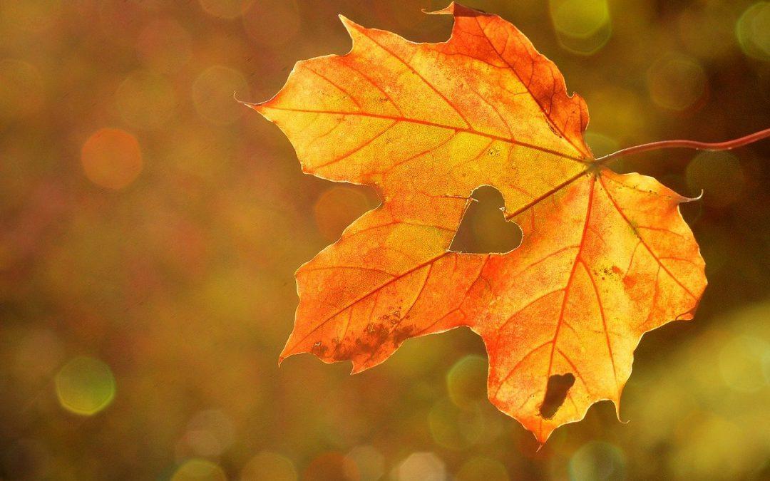 Stigla nam je jesen te smo isto obilježili primjerenom svečanošću